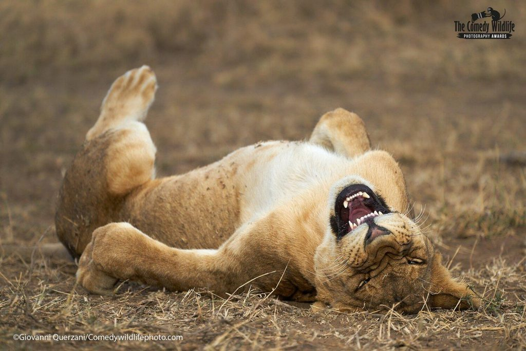 The Comedy Wildlife Photography Awards Are Offering a Peek at This Year's Funniest Entries